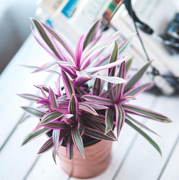 verde-casa-green-piante-appartamento-stile-vita-magazine-immobiliare-morabito-1.jpg